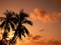 palmtree-55-516x306 copy
